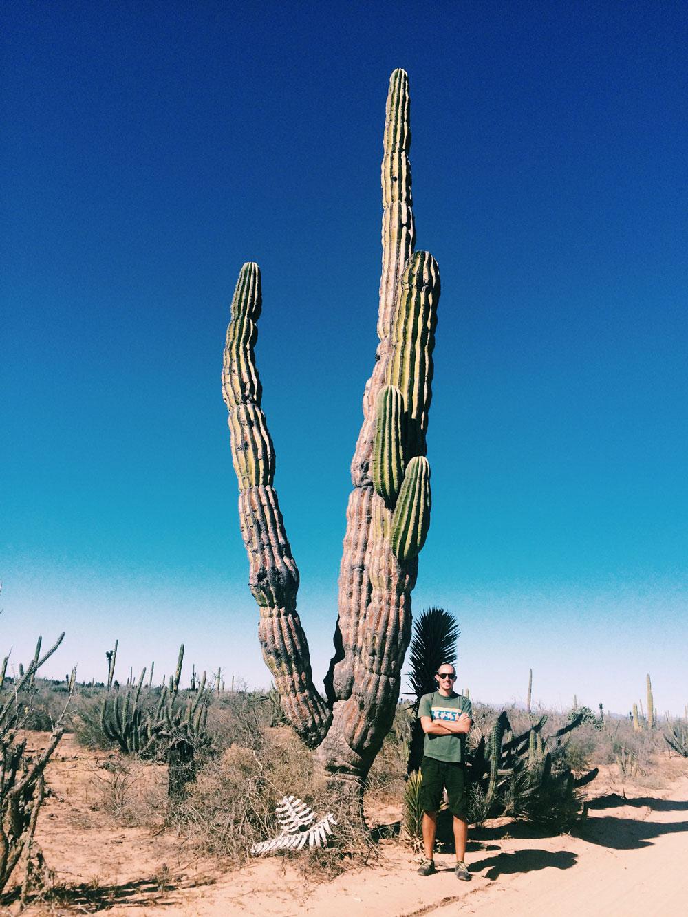 cactus-giganti-baja-califor