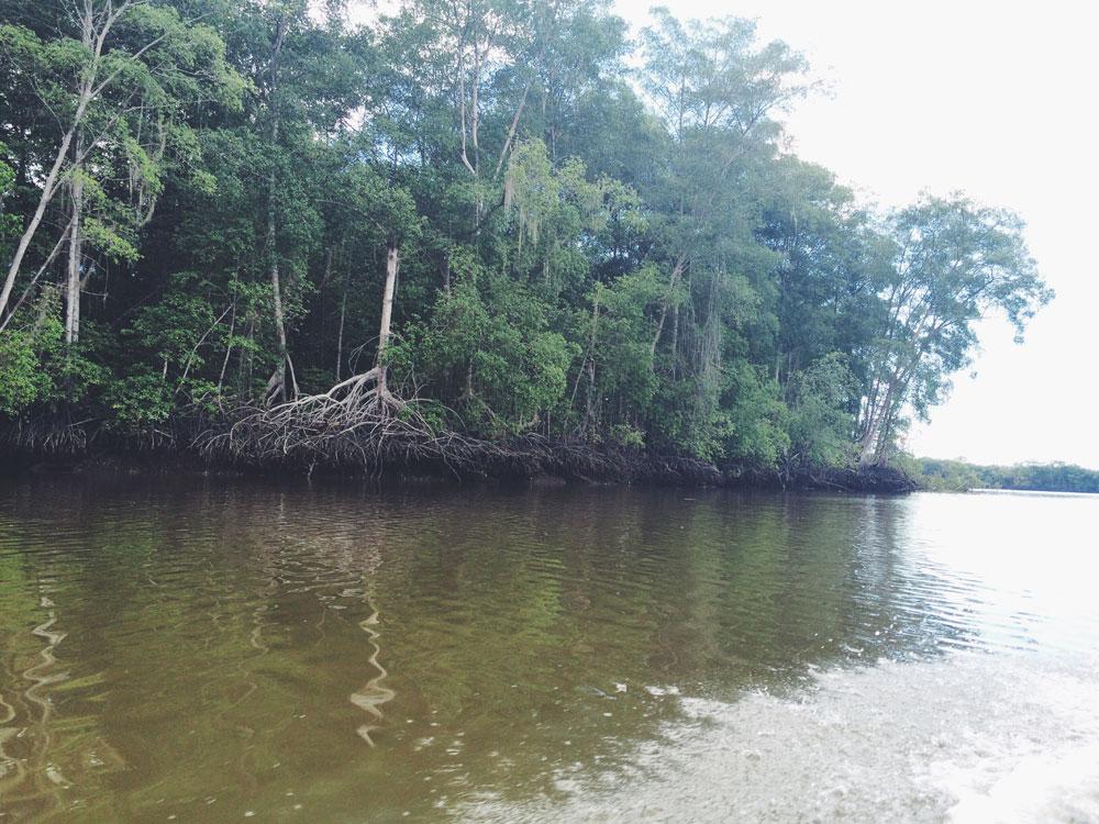 manglares-mas-altos-del-mun
