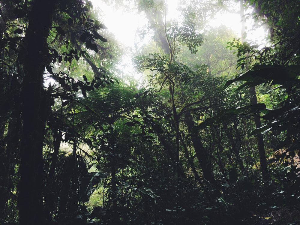 monteverde-bosque-nuboso