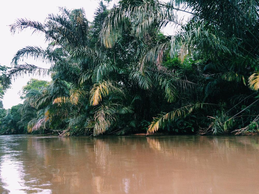 vegetazione-costa-rica