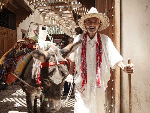 Il mezzo di trasporto più comune nella Medina di fez
