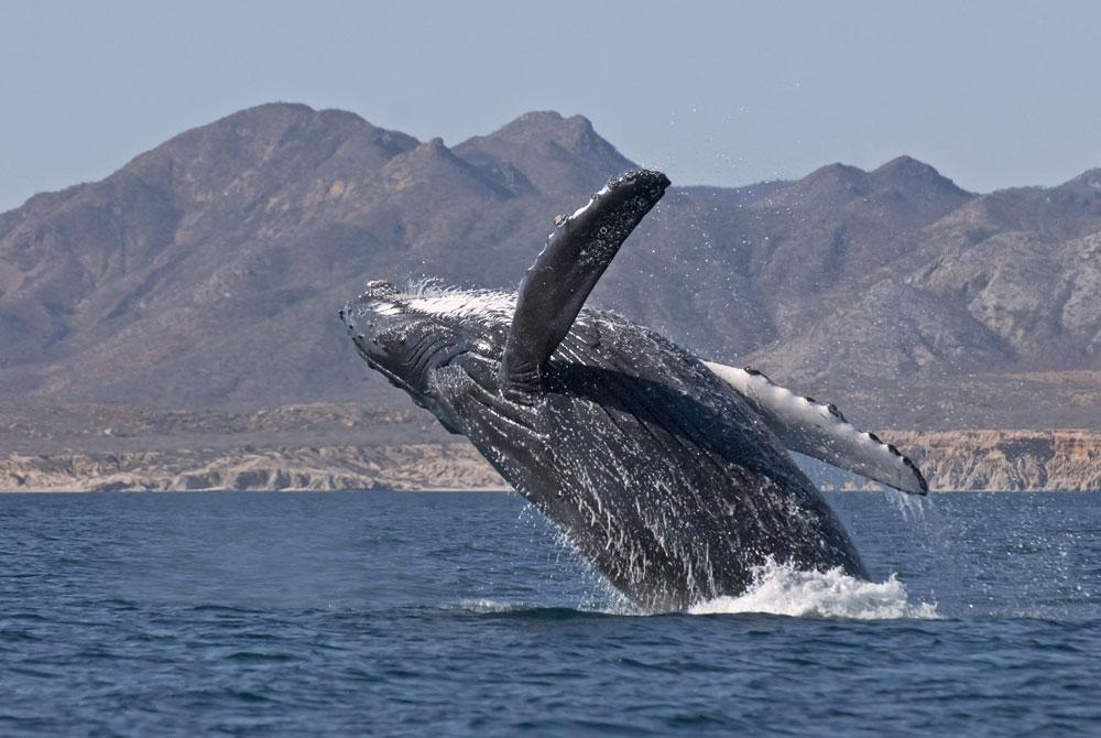 Salto-Balena-Grigia
