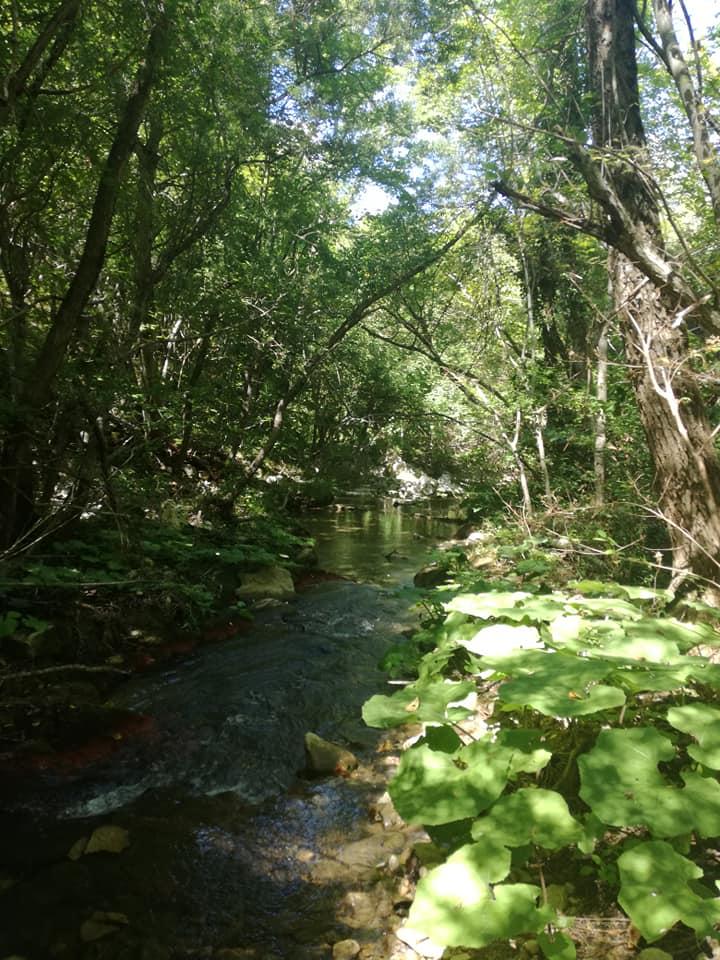 rio verde 06