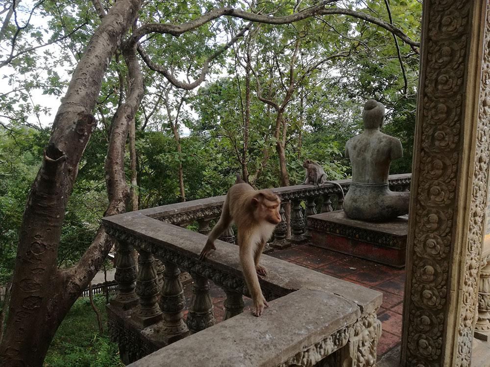 scimmie-tempio-buddista